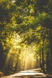 Luz a través de los árboles Fotografía de archivo libre de regalías