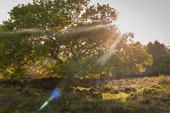 Luz a través de los árboles Imágenes de archivo libres de regalías