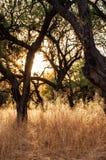 Luz a través de los árboles y de las malas hierbas secadas foto de archivo libre de regalías