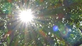 Luz a través del árbol en selva tropical tropical almacen de metraje de vídeo