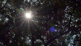 Luz a trav?s del ?rbol en selva tropical tropical almacen de metraje de vídeo