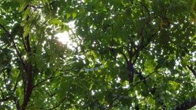 Luz a trav?s del ?rbol en selva tropical tropical metrajes