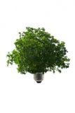 Luz - verde Imagem de Stock