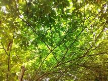 Luz verde Fotos de Stock Royalty Free