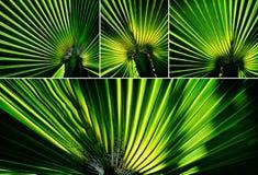 Luz verde maravillosa Fotos de archivo libres de regalías