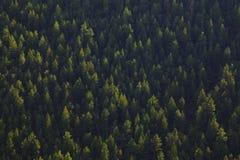 Luz y árboles Fotografía de archivo