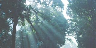 Luz y árboles Fotos de archivo libres de regalías