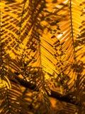 Luz y línea para los fondos Imagen de archivo libre de regalías
