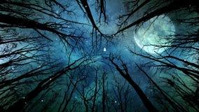 Luz y nieve de luna a través de los árboles 4K metrajes