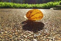Luz y sombra Fotografía de archivo libre de regalías