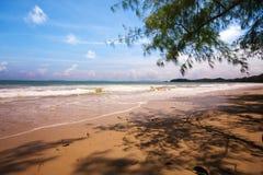Luz y sombra de los pinos tropicales del mar Imagenes de archivo