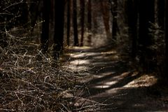 Luz y sombras Foto de archivo libre de regalías