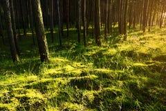 Luz y sombras en piso del bosque fotografía de archivo libre de regalías