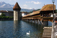 Luzern Switzerland wood bridge and swan Stock Photo