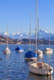 Luzerne de lac Images stock