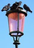 Luzes cor-de-rosa na praça San Marco, Veneza, Itália Fotos de Stock