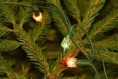 Luzes da árvore de Natal em ramos de árvore do abeto Fotos de Stock
