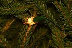Luzes da árvore de Natal em ramos de árvore do abeto Foto de Stock Royalty Free