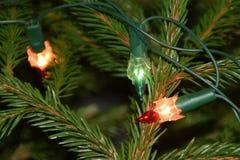 Luzes da árvore de Natal em ramos de árvore do abeto Fotografia de Stock Royalty Free