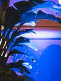 Luzes da noite da cidade em uma planta imagens de stock