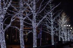 Luzes de Natal da iluminação do inverno nas árvores, exteriores fotografia de stock