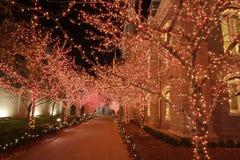 Luzes de Natal na noite fotografia de stock royalty free