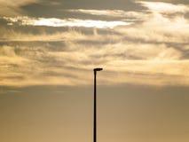 Luzes de rua no por do sol sobre e na paisagem urbana Foto de Stock Royalty Free