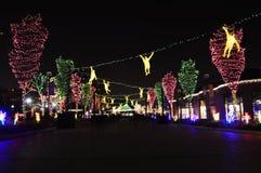 Luzes do jardim zoológico de Chicago fotografia de stock
