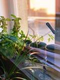 Luzes do por do sol na janela Imagem de Stock Royalty Free