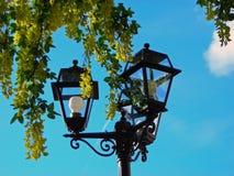 Luzes e árvore Foto de Stock