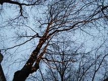 Luzes feericamente na árvore fotos de stock royalty free