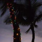 Luzes na palmeira. fotografia de stock