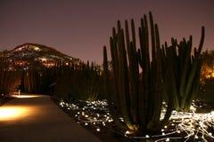 Luzes no deserto Imagem de Stock
