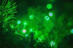Luzes sempre-verdes e de Natal Imagem de Stock