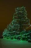 Luzes verdes do feriado em árvores Imagens de Stock