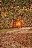 Élévation de Sun sur la vieille voie de chêne Images stock