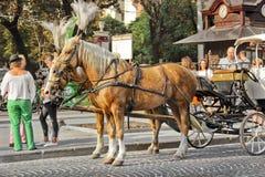 Lviv, de Oekraïne - Augustus 25, 2018: Paarden met een vervoer in het stadscentrum stock afbeelding