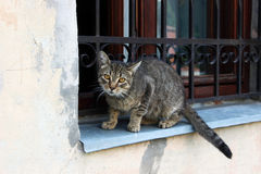 Lviv lös katt royaltyfri bild