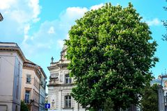 Lviv street in old part of city and Chestnut blooming tree, Ukraine. Lviv street in old part of city and Chestnut blooming tree by blue sky, Ukraine royalty free stock photography