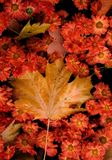 Lviv Ukraina w jesieni obrazy stock