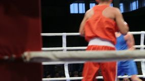 LVIV, UKRAINE - November 14, 2017 Boxing tournament. Midweight boxers fight in boxing ring on tournament. Steadycam shot stock video footage