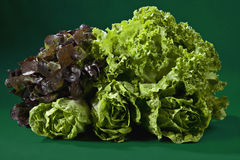 Lövrika grönsaker mot grön bakgrund Arkivbild