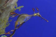 lövrikt hav för drake Arkivbild