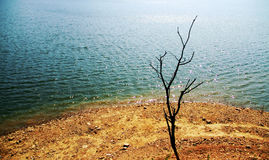 Lvshun,大连,中国河,死的树 免版税库存图片