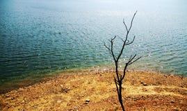Lvshun, Dalian, China-Fluss, toter Baum Lizenzfreie Stockbilder