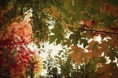Lvshun, foglie di acero di Dalian, Cina Fotografie Stock Libere da Diritti
