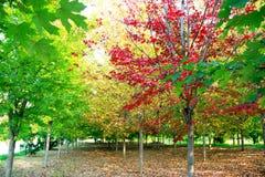 Lvshun, foglie di acero di Dalian, Cina Fotografie Stock