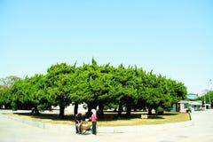 Lvshun, foglie di acero di Dalian, Cina Immagine Stock