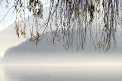 Lövverk av trädet på Annecy sjön i Frankrike Royaltyfria Foton