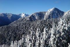 Lwów szczyty od pardwy góry Vancouver Obraz Stock